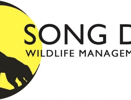 Song Dog Wildlife
